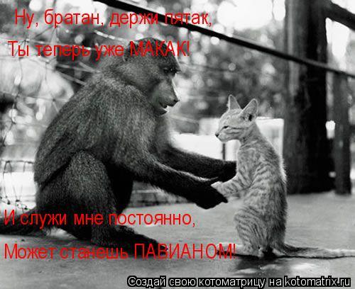 Котоматрица: Ну, братан, держи пятак, Ты теперь уже МАКАК! И служи мне постоянно, Может станешь ПАВИАНОМ!