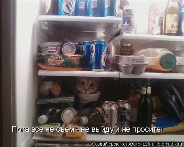 Котоматрица: Пока все не съем - не выйду и не просите!