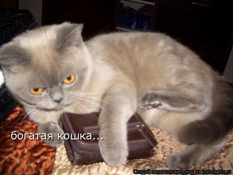 Котоматрица: богатая кошка...