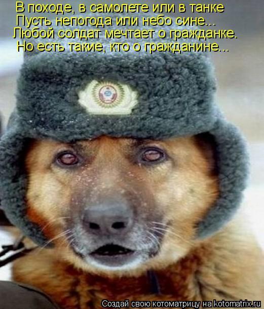 Котоматрица: В походе, в самолете или в танке Пусть непогода или небо сине... Любой солдат мечтает о гражданке. Но есть такие, кто о гражданине...