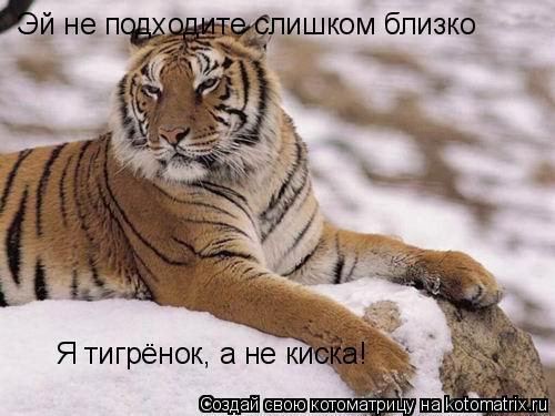 Котоматрица: Эй не подходите слишком близко Я тигрёнок, а не киска!