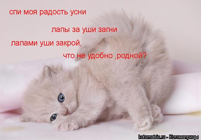Котоматрица: спи моя радость усни лапы за уши загни лапами уши закрой, что не удобно ,родной?