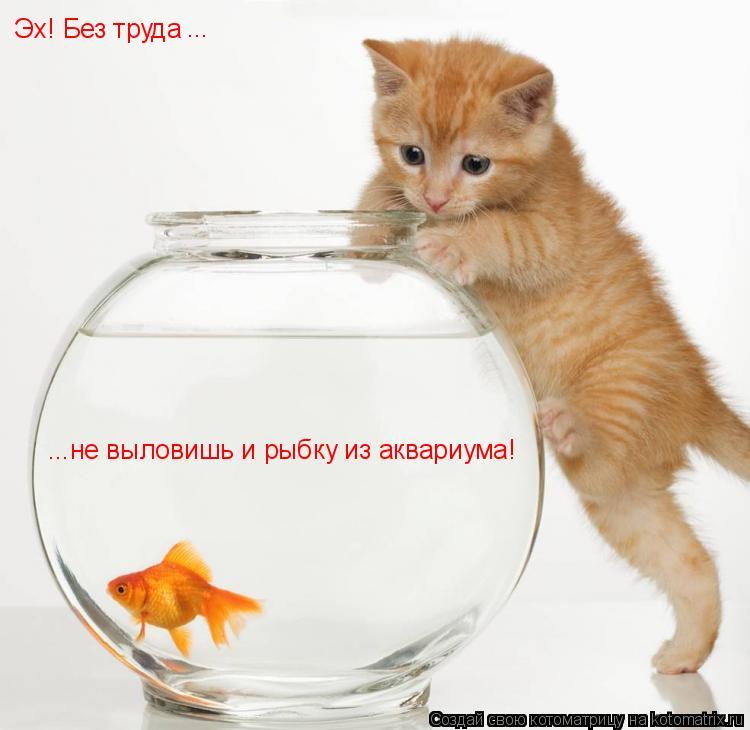 Котоматрица: Эх! Без труда ...не выловишь и рыбку из аквариума! ...
