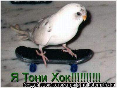 Котоматрица: Я Тони Хок!!!!!!!!!!