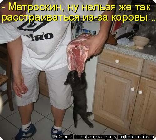 Котоматрица: - Матроскин, ну нельзя же так расстраиваться из-за коровы...