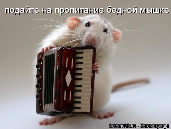 Котоматрица: подайте на пропитание бедной мышке