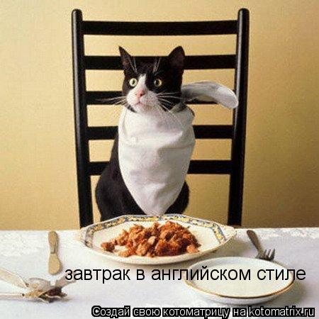 Котоматрица: завтрак в английском стиле