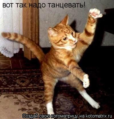 Котоматрица: вот так надо танцевать!