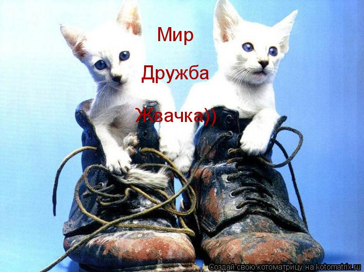 Котоматрица: Мир Дружба Жвачка))