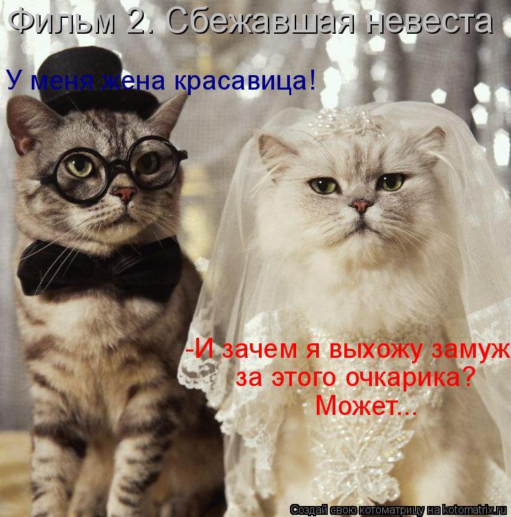 Котоматрица: -И зачем я выхожу замуж за этого очкарика?  Может... У меня жена красавица! Фильм 2. Сбежавшая невеста