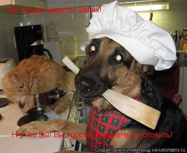 Котоматрица: Фу! Кошки! Шерсть! Запах! Н у что Вы! Вы просто не умеете их готовить!
