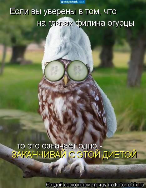 Котоматрица: Если вы уверены в том, что на глазах филина огурцы то это означает одно -  ЗАКАНЧИВАЙ С ЭТОЙ ДИЕТОЙ