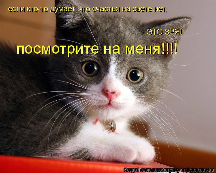 Котоматрица: если кто-то думает, что счастья на свете нет, ЭТО ЗРЯ! посмотрите на меня!!!!