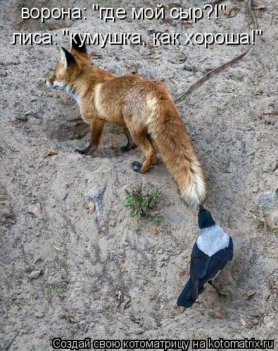 """Котоматрица: ворона: """"где мой сыр?!"""" лиса: """"кумушка, как хороша!"""""""