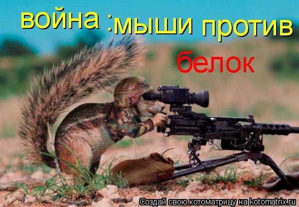 Котоматрица: война : мыши против белок