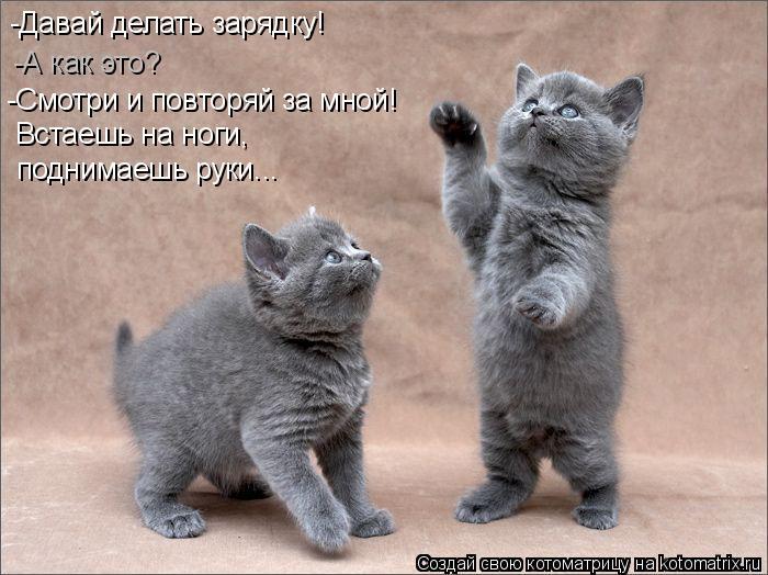 Котоматрица: -Давай делать зарядку! -А как это? -Смотри и повторяй за мной! Встаешь на ноги,  поднимаешь руки...