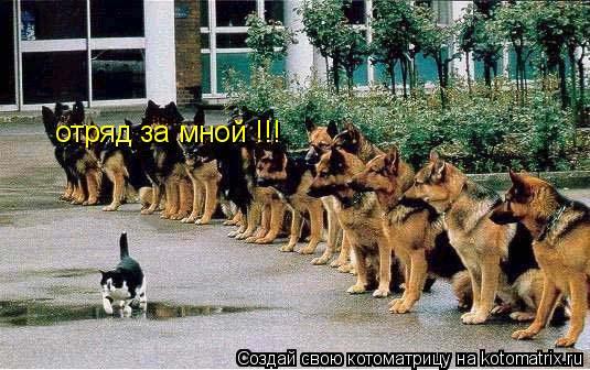Котоматрица: отряд за мной !!!