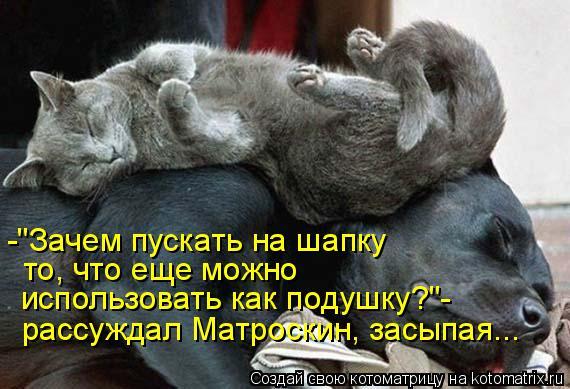 """Котоматрица: -""""Зачем пускать на шапку то, что еще можно  использовать как подушку?""""- рассуждал Матроскин, засыпая..."""