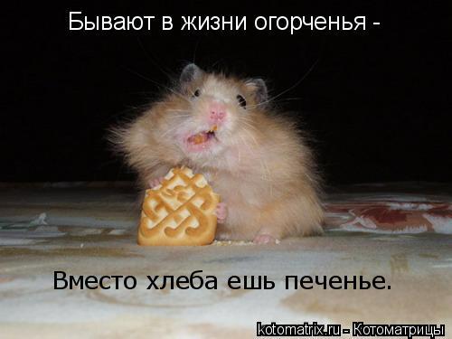 Котоматрица: Бывают в жизни огорченья - Вместо хлеба ешь печенье.