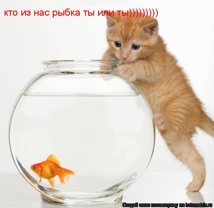 Котоматрица: кто из нас рыбка ты или ты)))))))))