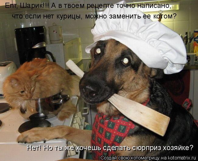 Котоматрица: Епт, Шарик!!! А в твоем рецепте точно написано, что если нет курицы, можно заменить ее котом? Нет! Но ты же хочешь сделать сюрприз хозяйке?