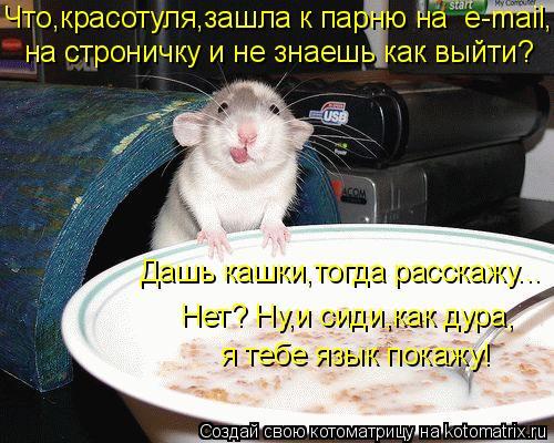 Котоматрица: Дашь кашки,тогда расскажу... Нет? Ну,и сиди,как дура, я тебе язык покажу! Что,красотуля,зашла к парню на  e-mail, на строничку и не знаешь как выйти