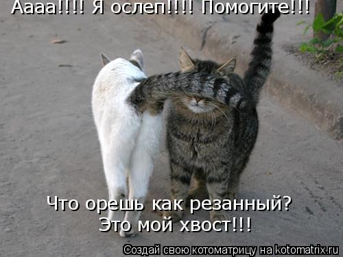 Котоматрица: Аааа!!!! Я ослеп!!!! Помогите!!! Это мой хвост!!! Что орешь как резанный?
