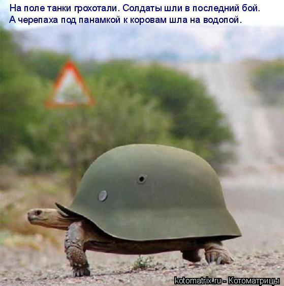 Котоматрица: На поле танки грохотали. Солдаты шли в последний бой. А черепаха под панамкой к коровам шла на водопой.