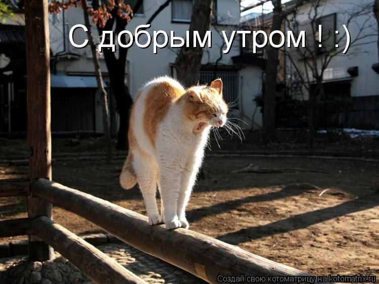 Котоматрица: С добрым утром ! :)