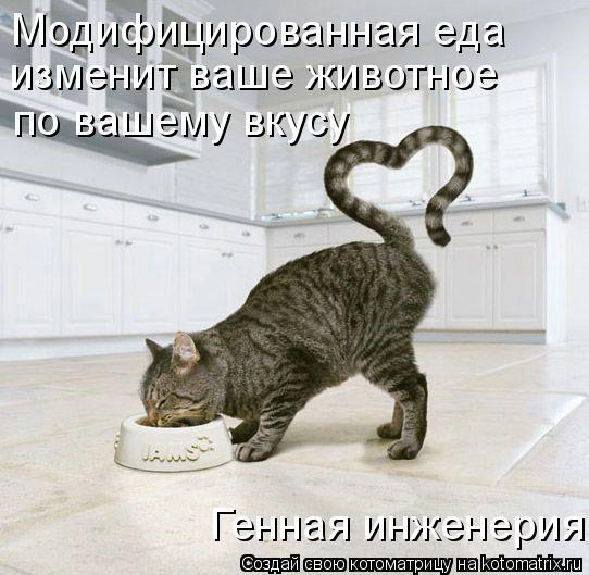 Котоматрица: Модифицированная еда  изменит ваше животное  по вашему вкусу   Генная инженерия