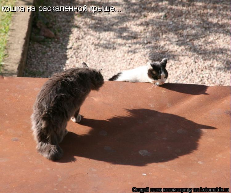 Котоматрица: кошка на раскаленной крыше...