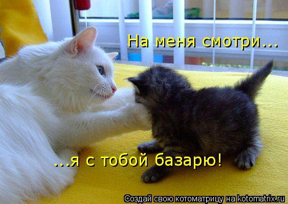 Котоматрица: На меня смотри... ...я с тобой базарю! ...я с тобой базарю!