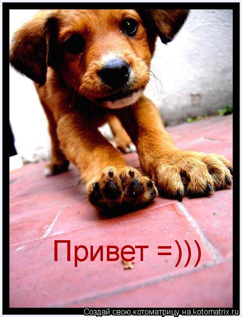 Котоматрица: Привет =)))