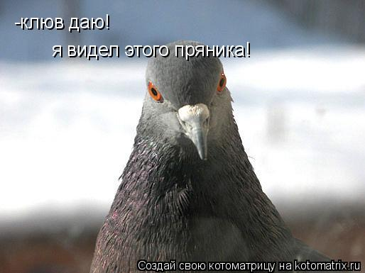 Котоматрица: -клюв даю! я видел этого пряника!