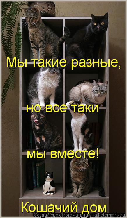 Котоматрица: Мы такие разные,  но все таки  мы вместе! Кошачий дом
