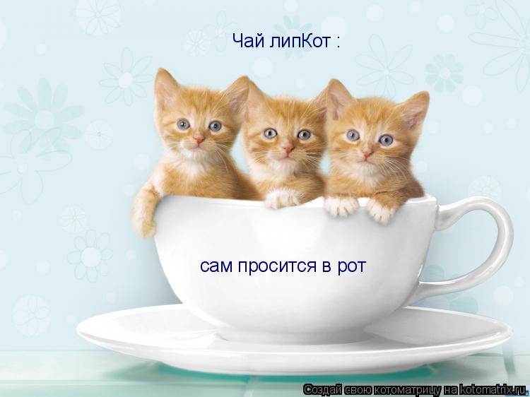 Котоматрица: сам просится в рот Чай липКот :