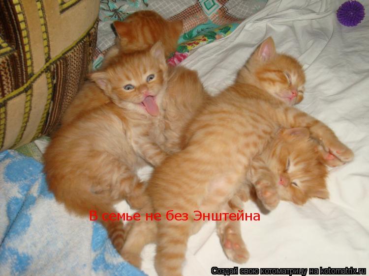 http://kotomatrix.ru/images/lolz/2009/05/23/Ud.jpg