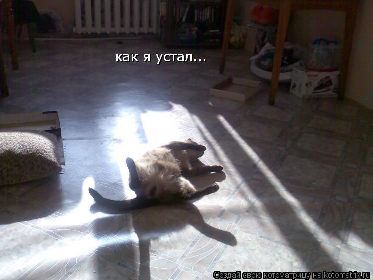 Котоматрица: как я устал...