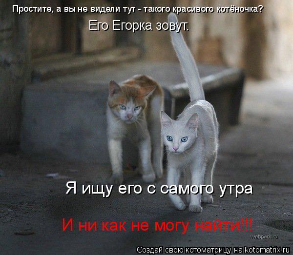 Котоматрица: Простите, а вы не видели тут - такого красивого котёночка? Его Егорка зовут. Я ищу его с самого утра И ни как не могу найти!!!