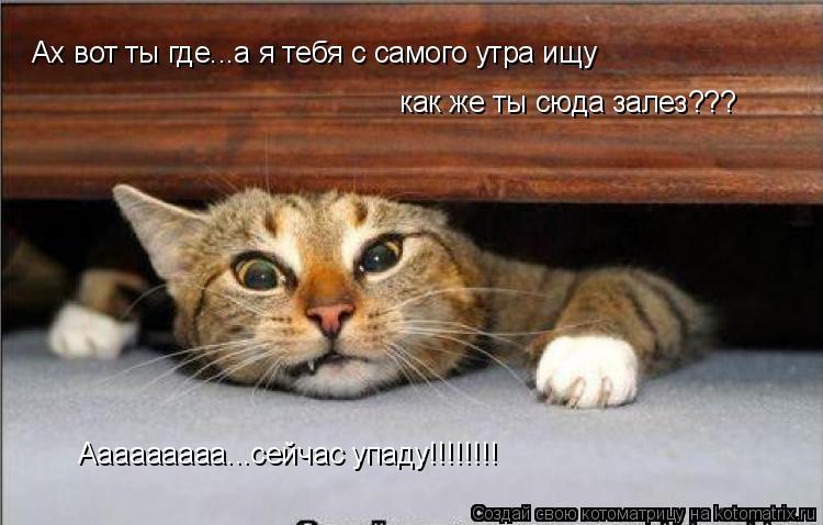 Котоматрица: Ах вот ты где...а я тебя с самого утра ищу как же ты сюда залез???  Ааааааааа...сейчас упаду!!!!!!!!