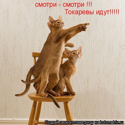 Котоматрица: смотри - смотри !!!  Токаревы идут!!!!!