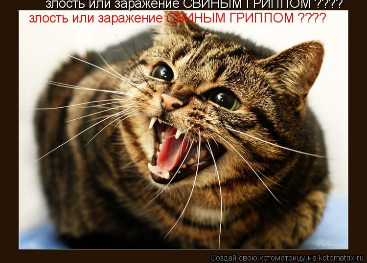 Котоматрица: злость или заражение СВИНЫМ ГРИППОМ ????  злость или заражение СВИНЫМ ГРИППОМ ????