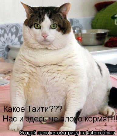 Котоматрица: Какое Таити??? Нас и здесь не плохо кормят!!!