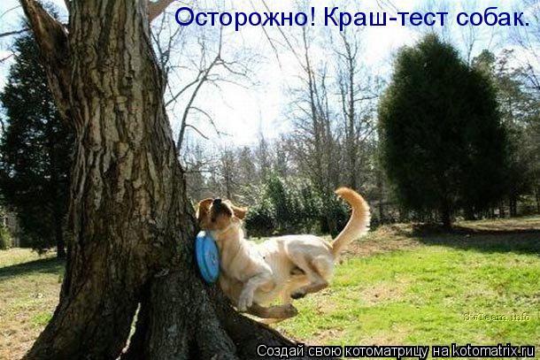 Котоматрица: Осторожно! Краш-тест собак.