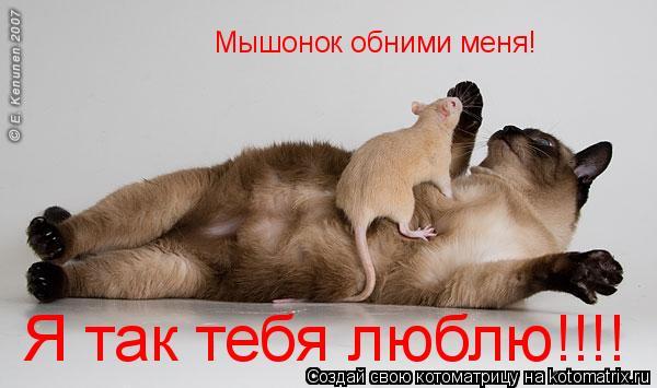 Котоматрица: Мышонок обними меня! Я так тебя люблю!!!!