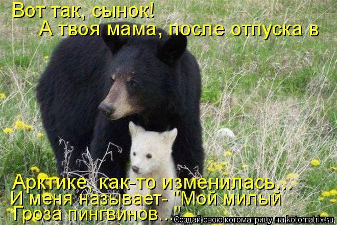 """Котоматрица: Вот так, сынок! А твоя мама, после отпуска в Арктике, как-то изменилась... И меня называет- """"Мой милый  Гроза пингвинов..."""""""