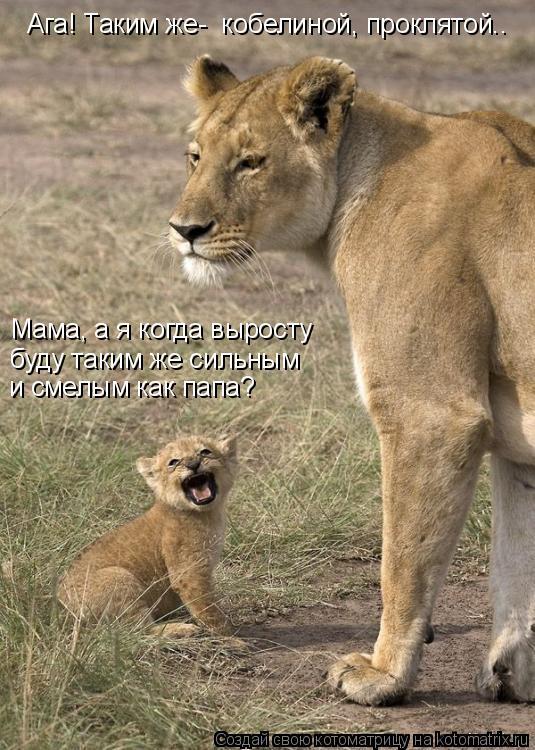 Котоматрица: Мама, а я когда выросту буду таким же сильным  и смелым как папа? Ага! Таким же-  кобелиной, проклятой..