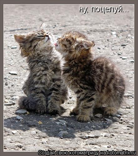 Котоматрица: ну, поцелуй...