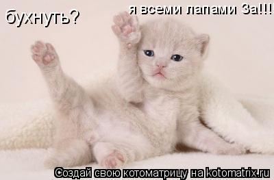 Котоматрица: бухнуть? я всеми лапами За!!!!