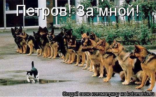 Котоматрица: Петров! За мной! Петров! За мной!